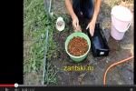 Стратификация семян абрикоса