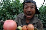 Китайское садоводство